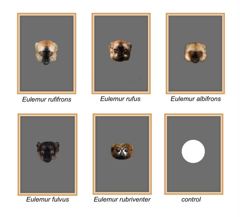 Examples of pictures of each species used as stimuli during the experiments and the control (white circle). Photo: Markolf