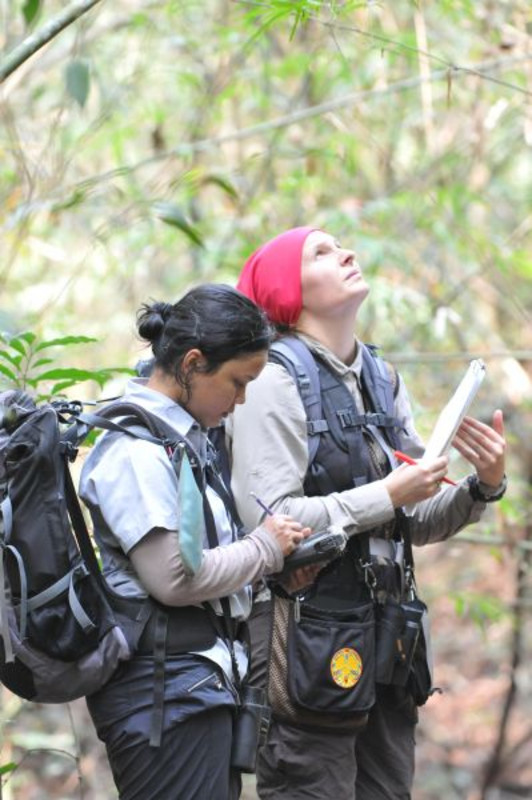 Two scientists observing the behavior of Assamese macaques in Thailand. Photo: Oliver Schülke