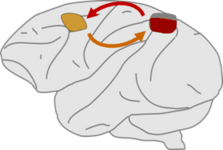 Fronto-parietal functional interactions