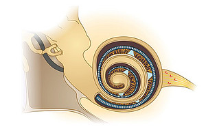 Optical cochlear implant