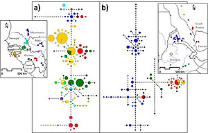 Genetic structure of West and East African baboons