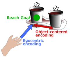 Object-centered reaching
