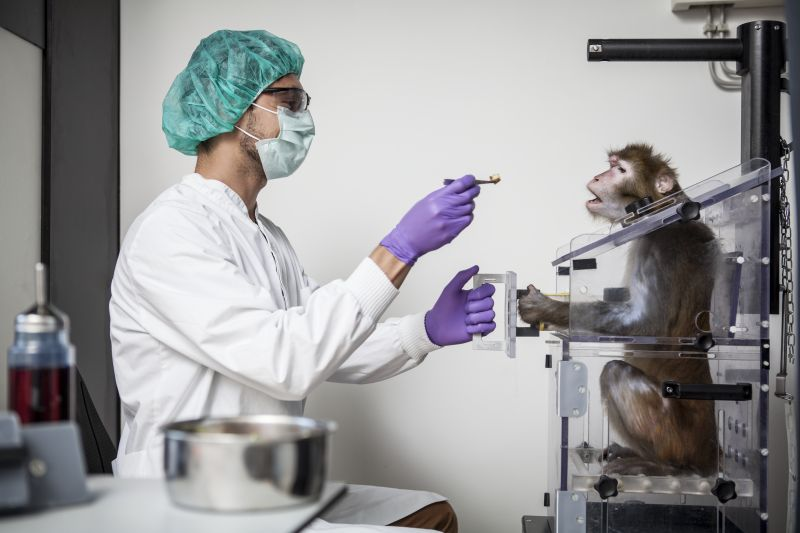 A neuroscientist during grasping-training with a rhesus macaque in a primate chair. Photo: Thomas Steuer