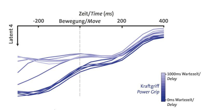 This figure shows the neuronal population activity in the brain when a power grip is executed. During the planning phase the activity patterns differ, depending on the waiting time (light blue: long waiting time, dark blue: short waiting time), during the execution of the movement there are no significant differences. Image: Benjamin Dann. CC-BY-NC-ND 4.0 International license.
