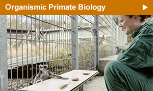 Research in the section Organismic Primate Biology is focussed on evolutionary basics of social and mating systems, ecology, vocal communication, biology of stem cells, and genetics in primates.