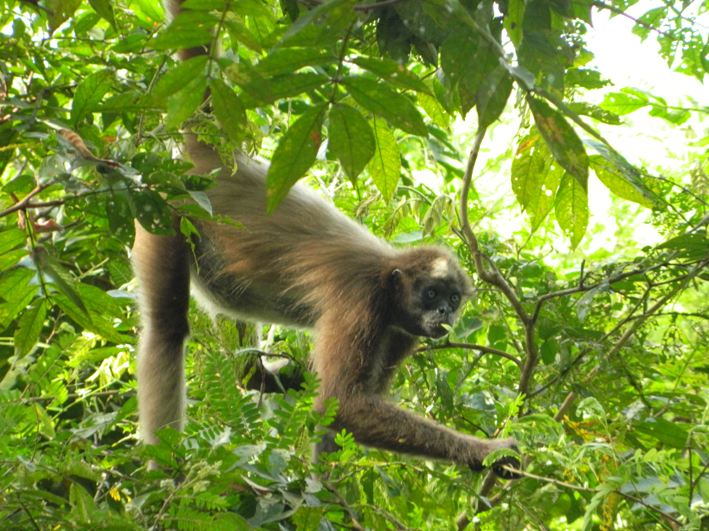 deutsches primatenzentrum eile statt weile forscher des deutschen primatenzentrums. Black Bedroom Furniture Sets. Home Design Ideas