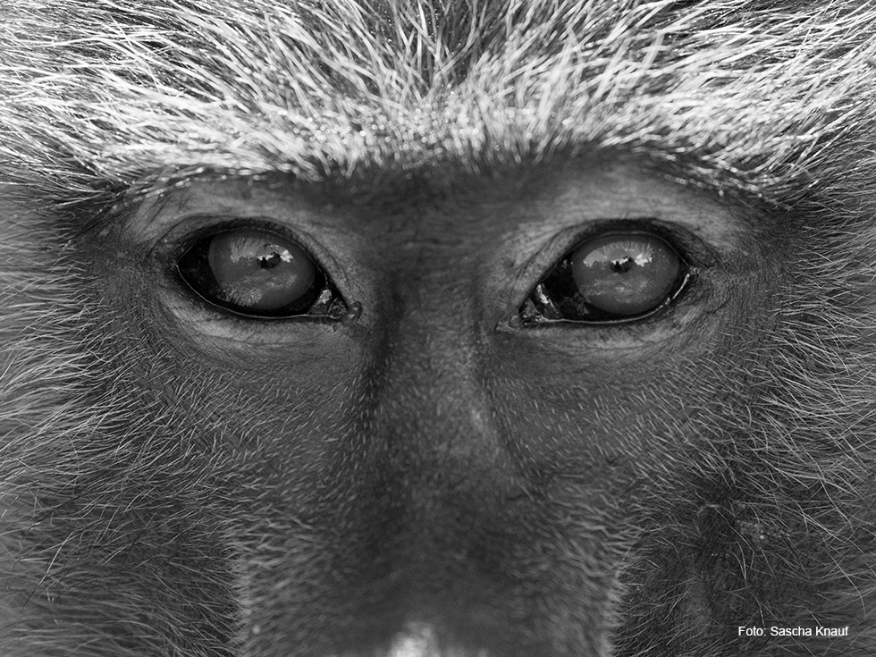 Deutsches Primatenzentrum: Virtuelle Tour: Ausstellung \